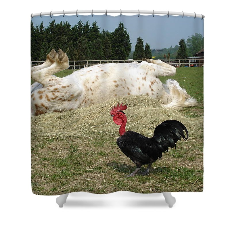 Pony Shower Curtain featuring the photograph If looks could kill by Susan Baker