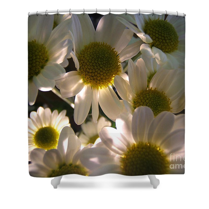 Artoffoxvox Shower Curtain featuring the photograph Illuminated Daisies Photograph by Kristen Fox