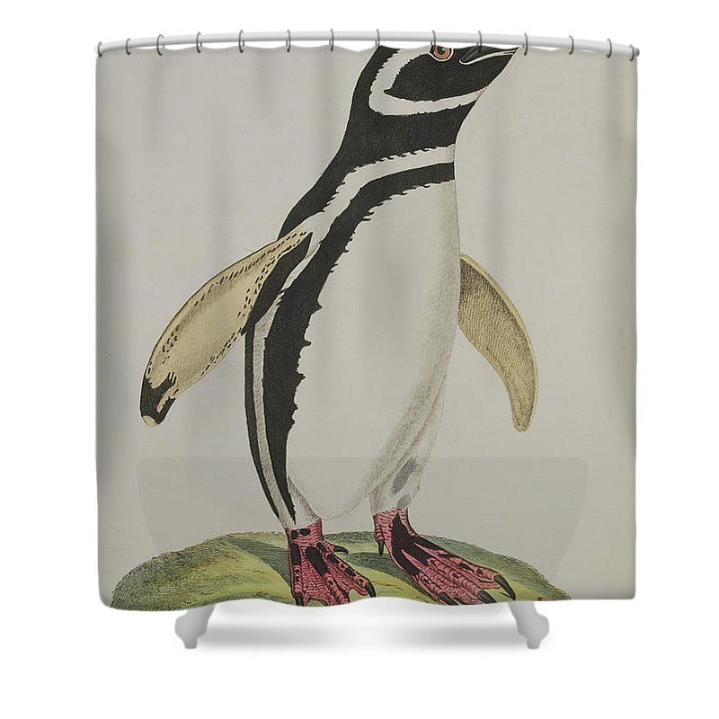 Penguin Shower Curtain featuring the painting Illustration Of A Penguin by John Frederick Miller