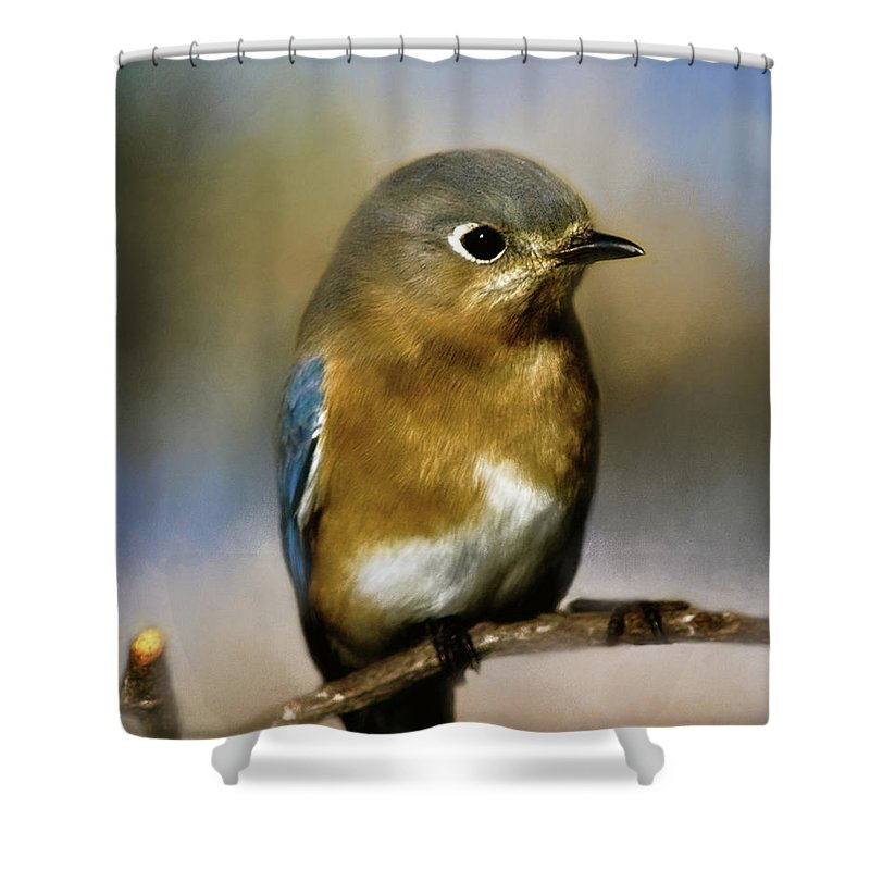 Animal Shower Curtain featuring the photograph I'm A Bluebird by Lana Trussell