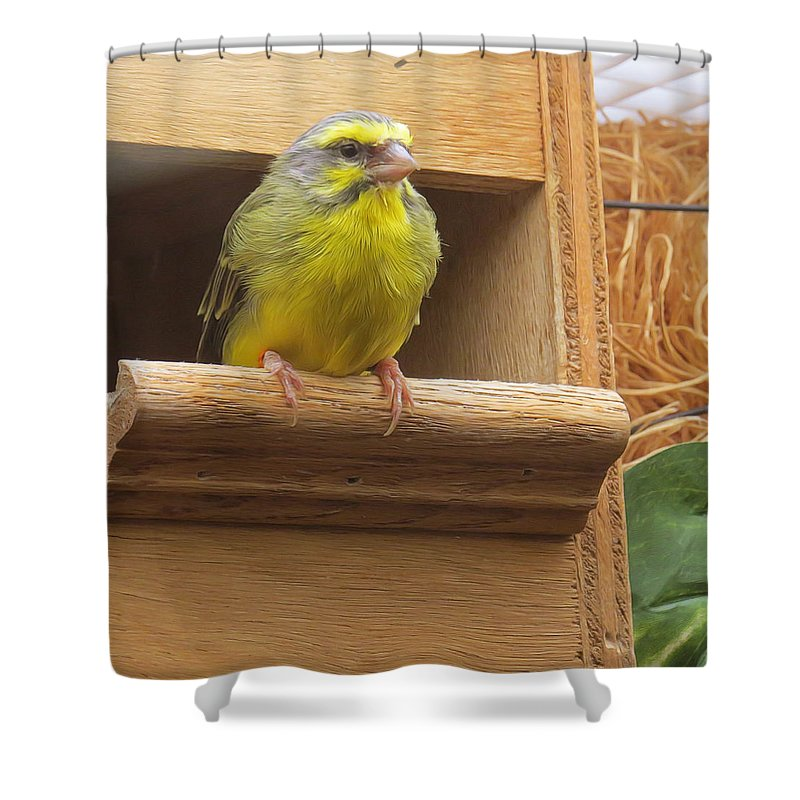 Animals Shower Curtain featuring the photograph I'm Ignoring You by Carolyn Fletcher