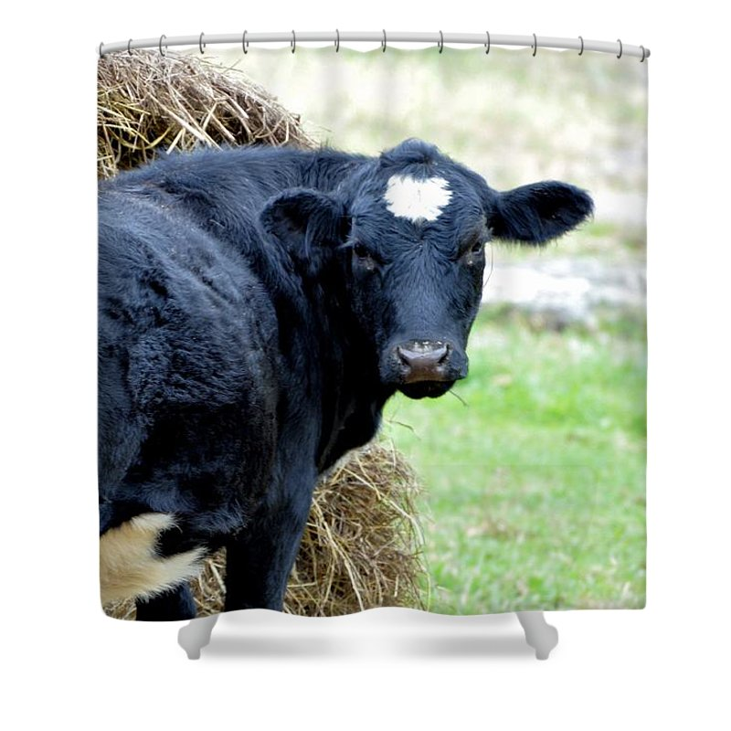 Animals Shower Curtain featuring the photograph I'm Looking Through You by Jan Amiss Photography