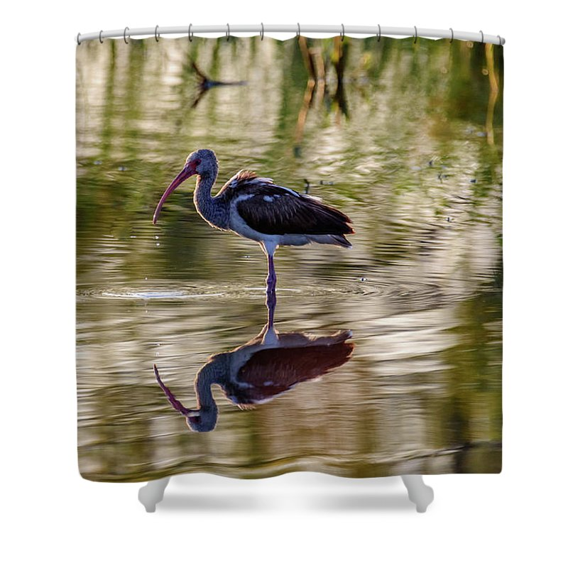 Birds Of South Texas Shower Curtain featuring the photograph Immature White Ibis At Sunrise by Debra Martz