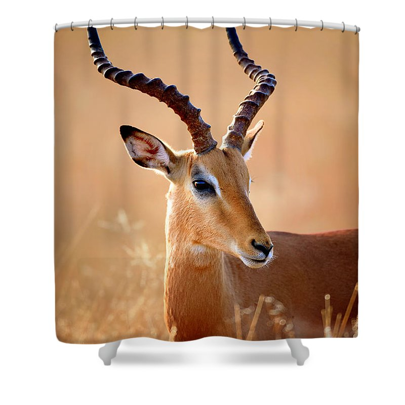 Impala Shower Curtain featuring the photograph Impala Male Portrait by Johan Swanepoel
