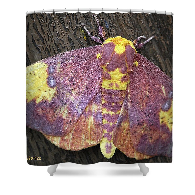 Moths Shower Curtain featuring the digital art Imperial Moth by DigiArt Diaries by Vicky B Fuller