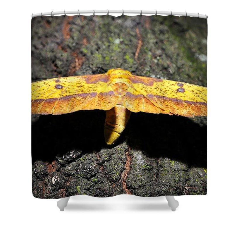 Imperial Moth Shower Curtain featuring the photograph Imperial Night by David Lee Thompson