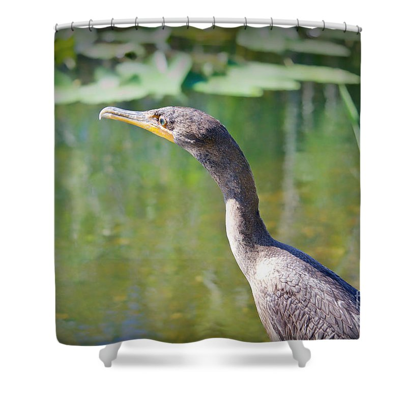 Birds Shower Curtain featuring the photograph Impressionable Cormorant by Judy Kay
