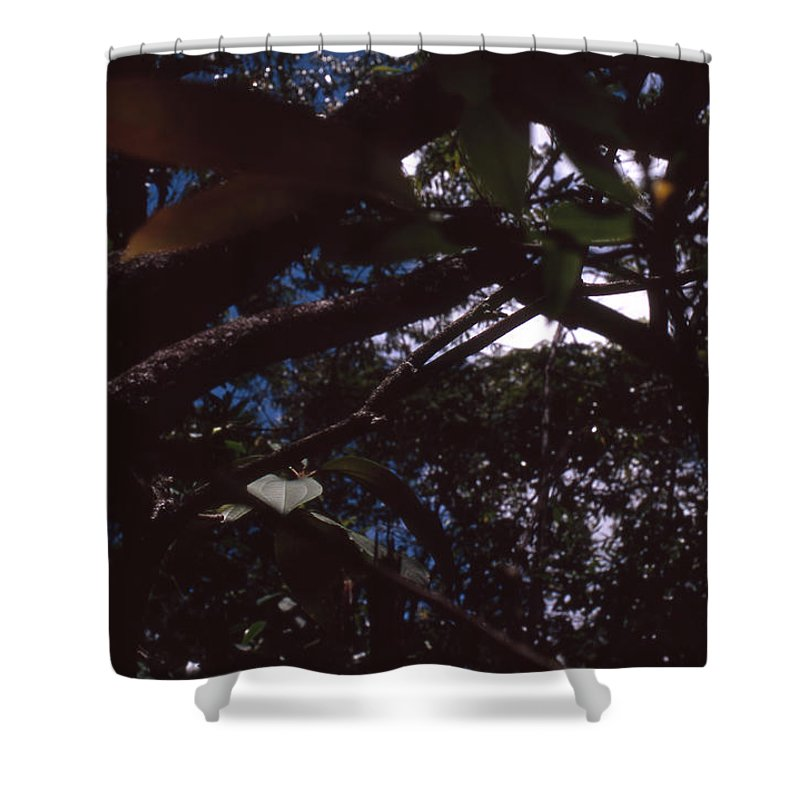 Bahia Shower Curtain featuring the photograph In A Brazilian Forest by Patrick Klauss