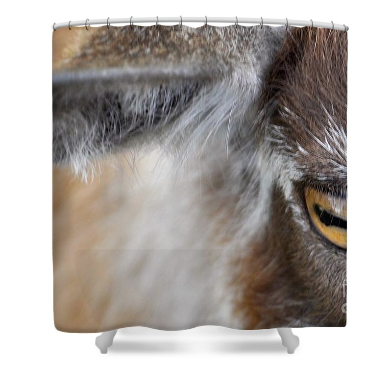 Goat Shower Curtain featuring the photograph In A Goat's Eye by Christina McKinney