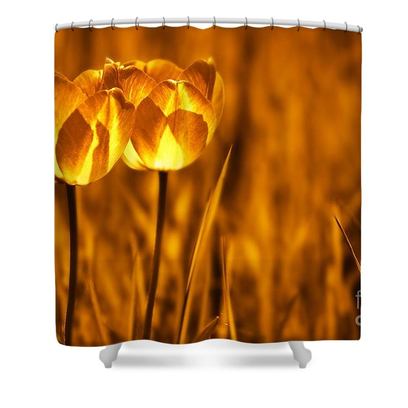 Tulips Shower Curtain featuring the photograph In A Perfect World by Jacky Gerritsen