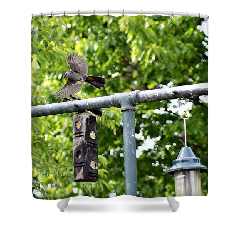 Birds Shower Curtain featuring the photograph In Flight by Cassandra Dice