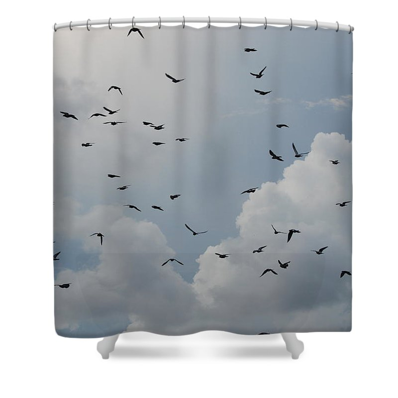 Birds Shower Curtain featuring the photograph In Flight by Rob Hans
