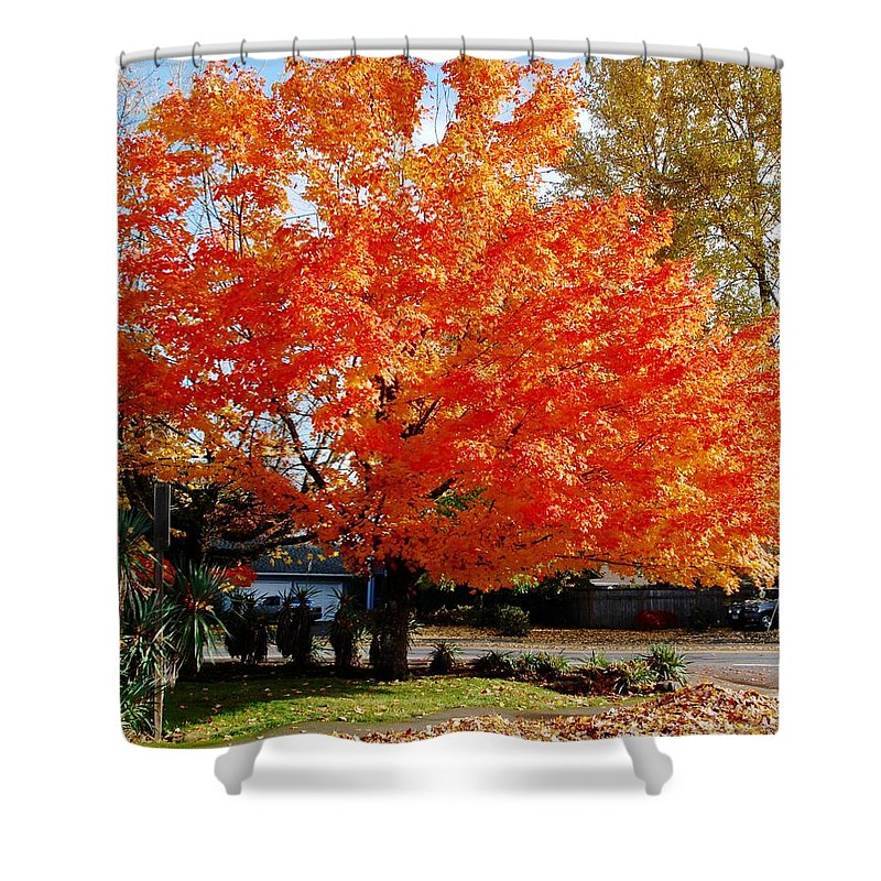 Orange Leaves Shower Curtain featuring the photograph In Living Color by David Coleman