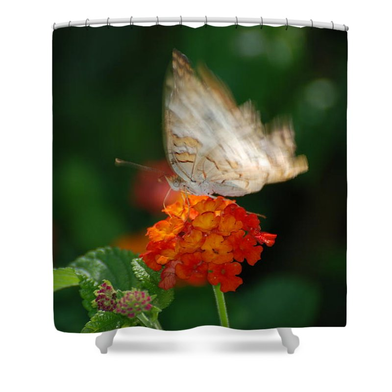 Butterfly Shower Curtain featuring the photograph In Living Color by Rob Hans