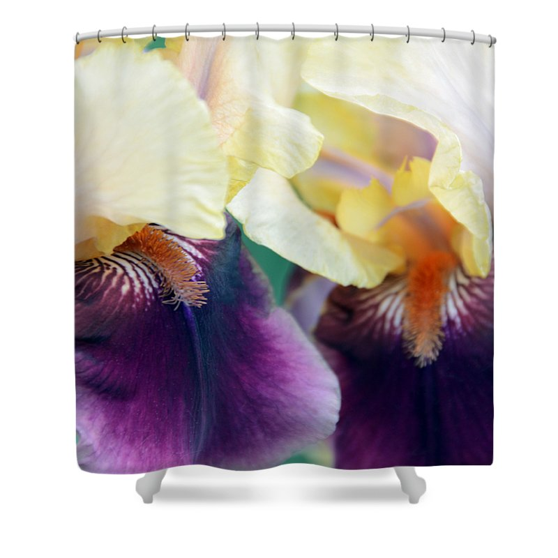 Iris Shower Curtain featuring the photograph In Love With Iris by Angelina Tamez