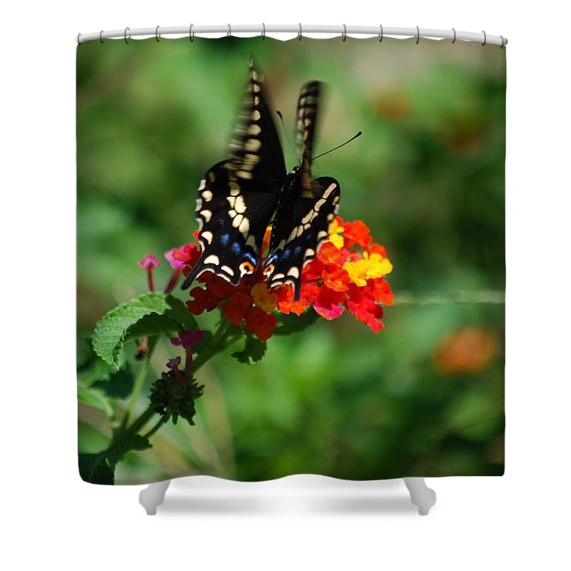 Swallowtail Shower Curtain featuring the photograph In Motion by Lori Tambakis