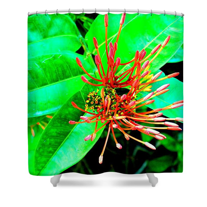 Flower Shower Curtain featuring the photograph In My Garden by Ian MacDonald