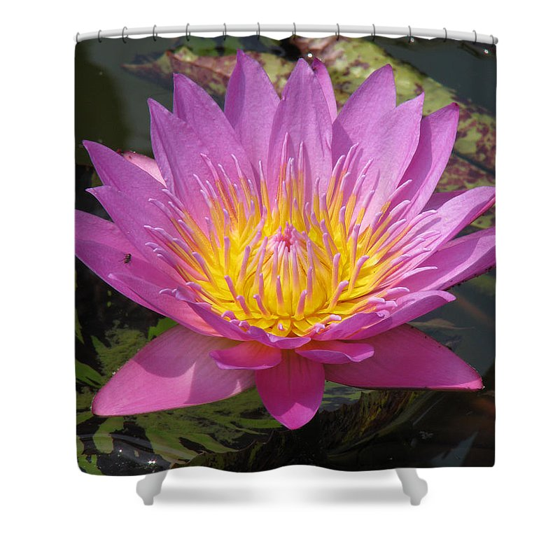 Lotus Shower Curtain featuring the photograph In Position by Amanda Barcon
