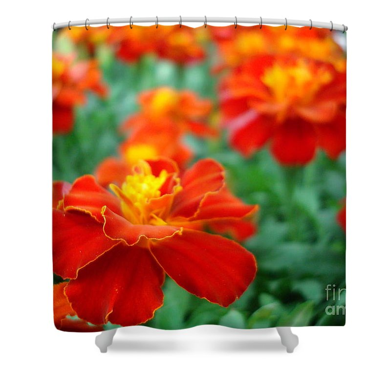 Floral Shower Curtain featuring the photograph In The Garden by Kathy Bucari