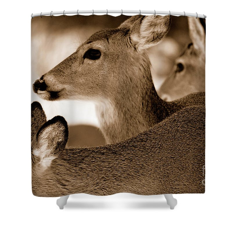 Deer Shower Curtain featuring the photograph In The Middle by Lori Tambakis