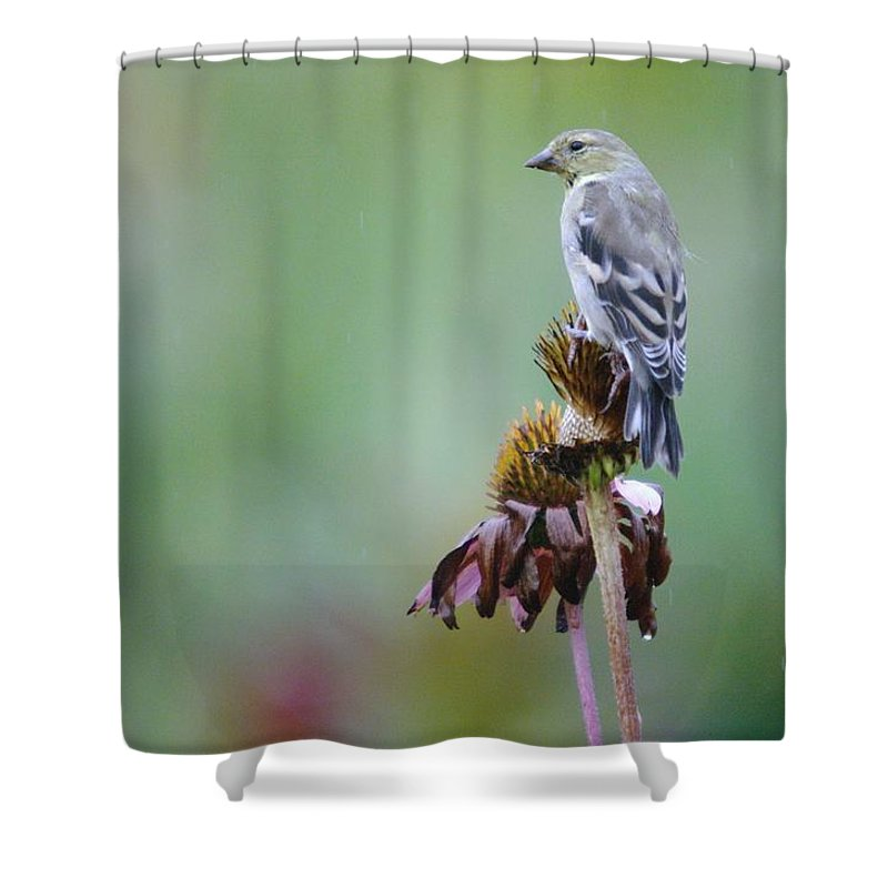 Digital Photography Shower Curtain featuring the photograph In The October Rain by Jeff Swan