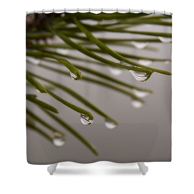 Pine Tree Needle Drop Droplet Reflection Rain Green Fog Foggy Nature Outdoors Hike Shower Curtain featuring the photograph In The Rain by Andrei Shliakhau