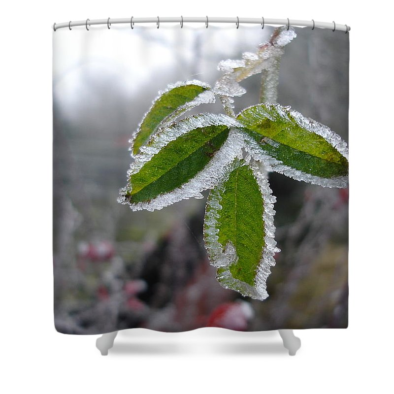 Winter Shower Curtain featuring the photograph In the winter sunlight by Susan Baker