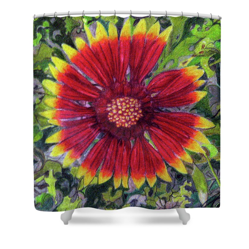 Fuqua - Artwork Shower Curtain featuring the drawing Indian Blanket by Beverly Fuqua