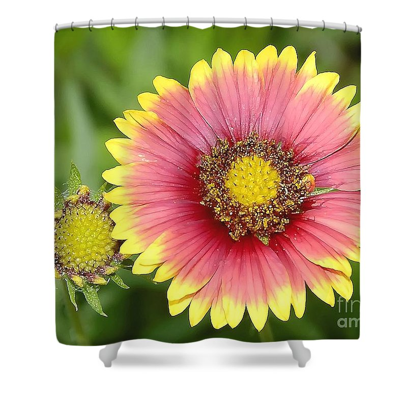 Indian Paintbrush Shower Curtain featuring the photograph Indian Paintbrush by David Lee Thompson