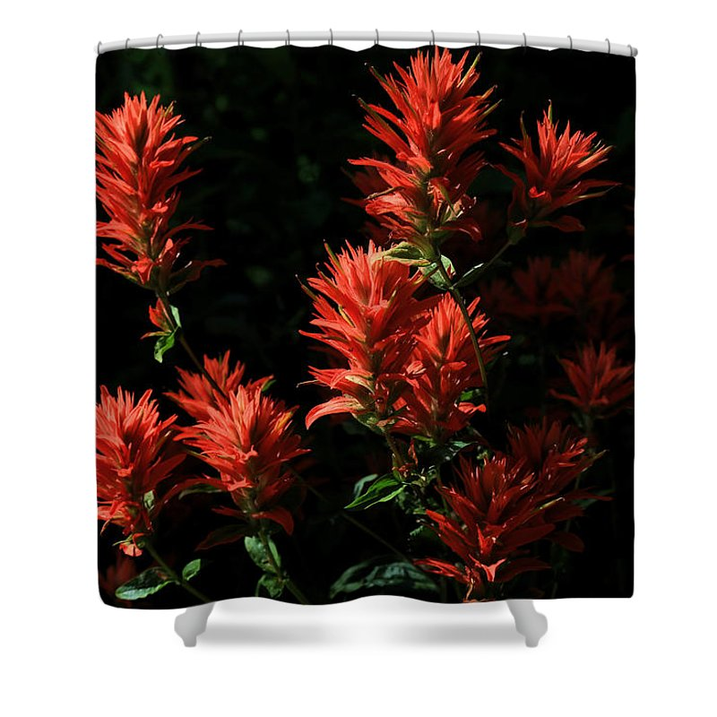 Indian Paintbrush Shower Curtain featuring the photograph Indian Paintbrush by Donna Kennedy