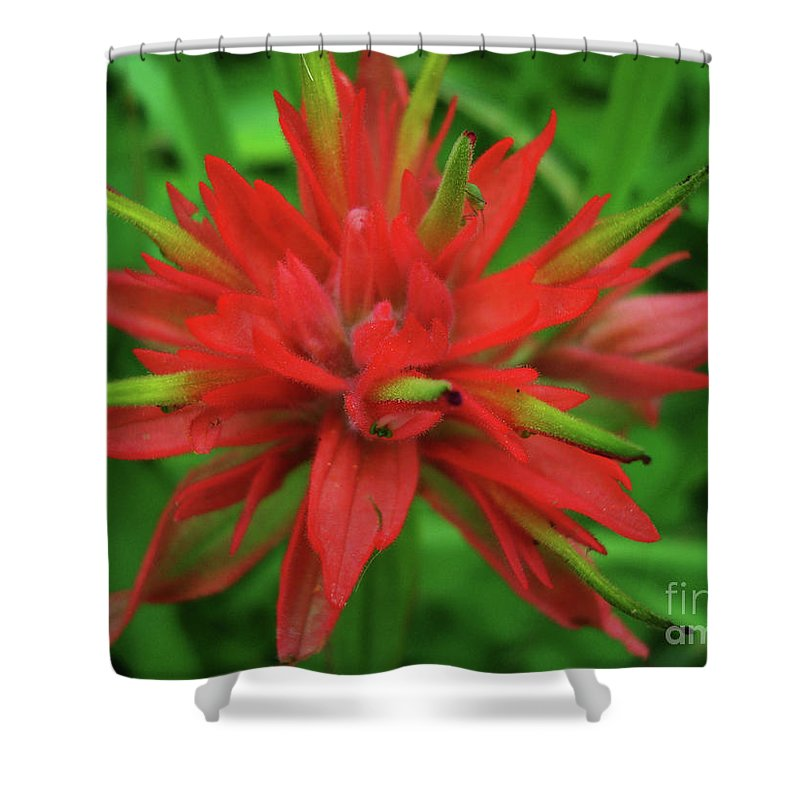Indian Paintbrush Shower Curtain Featuring The Photograph Red Flower By Maili Page