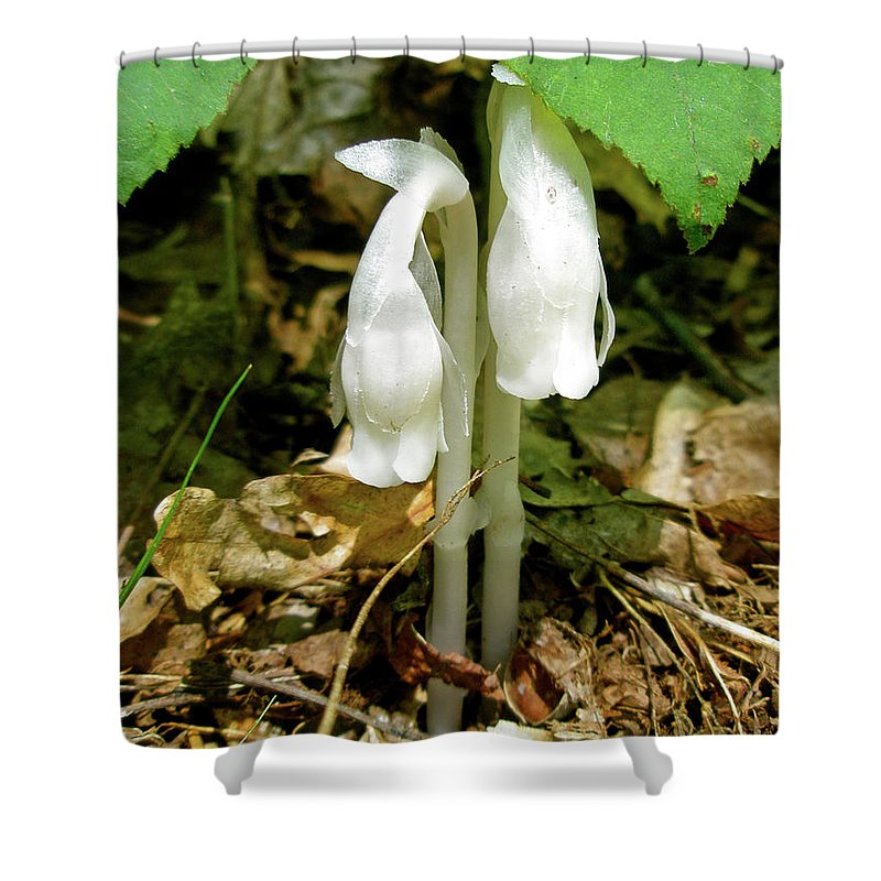 indian Pipes Shower Curtain featuring the photograph Indian Pipes - Monotropa Uniflora by Mother Nature