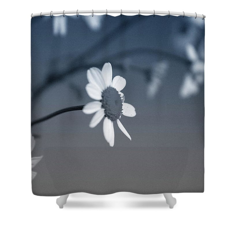 Floral Shower Curtain featuring the mixed media Indigo Daisies 1- Art By Linda Woods by Linda Woods