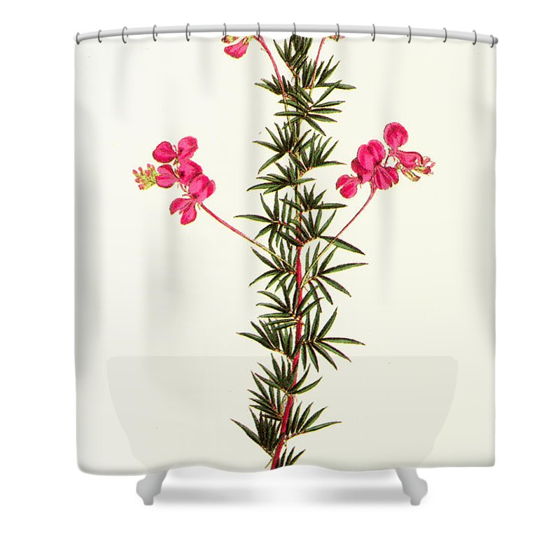 1799 Shower Curtain featuring the photograph Indigo Plant by Granger