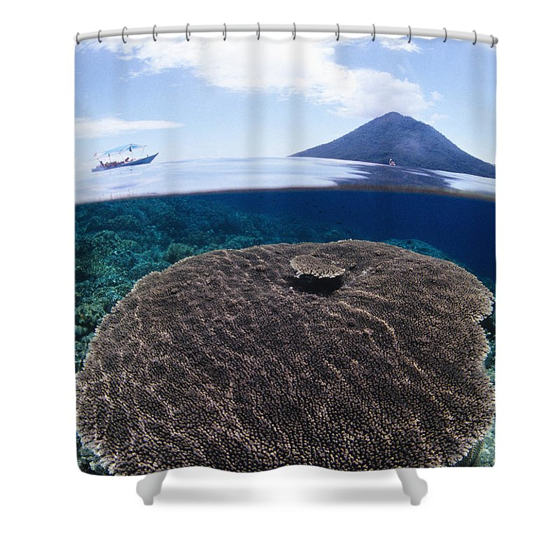 Above Shower Curtain featuring the photograph Indonesia, Coral Reef by Dave Fleetham - Printscapes