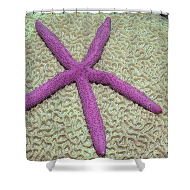 Above Shower Curtain featuring the photograph Indonesia, Pink Sea Star by Ed Robinson - Printscapes