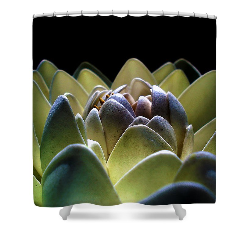 Indonesia Shower Curtain featuring the photograph Indonesian White Lotus by Sumit Mehndiratta