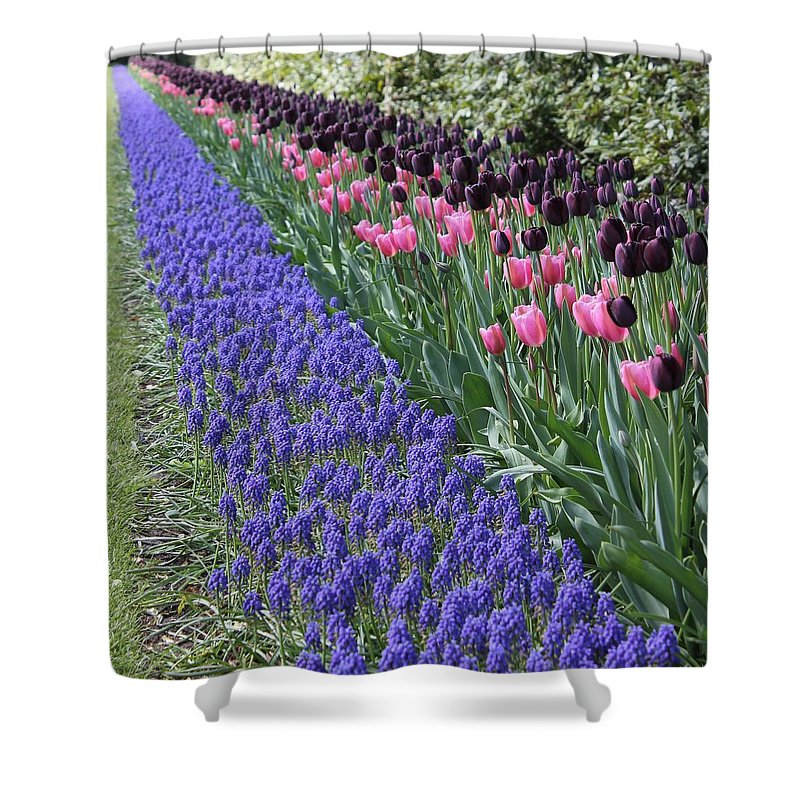 Pink Tulips Flowers Colors Garden Outdoors Colorful Happy Keukenhof Relaxing Pleasing Attractive Vibrant Shower Curtain featuring the photograph Infinity by Charles Van Wagenen Jr