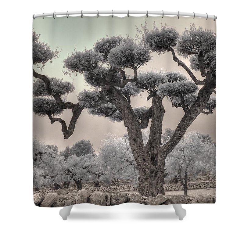 Olive Shower Curtain Featuring The Photograph Infrared Spanish Tree Bonsai By Jane Linders