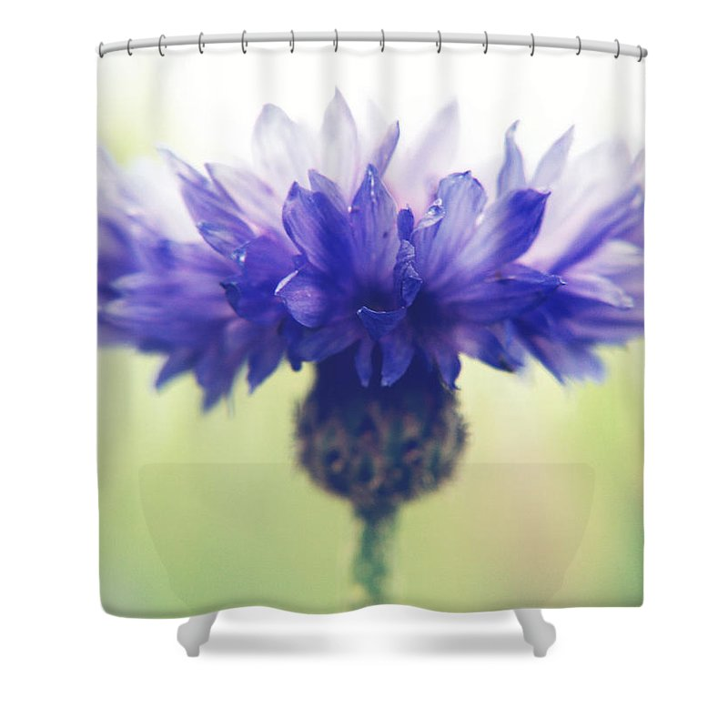 Photography Shower Curtain featuring the photograph Innocence Of Spring by Jackie Farnsworth