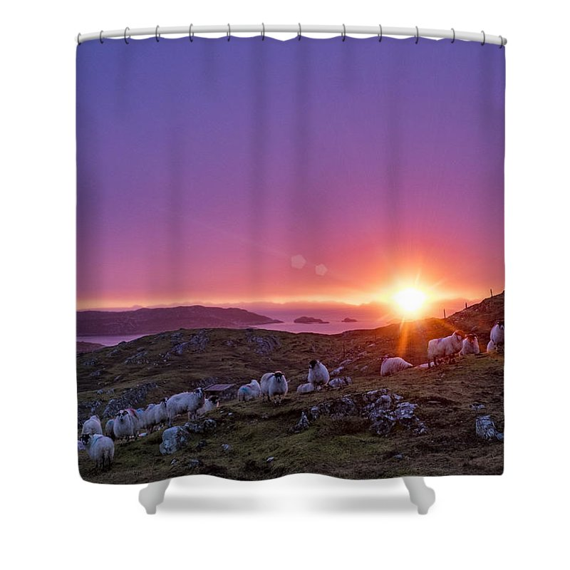 Scotland Shower Curtain featuring the photograph Inquisitive Flock At Dawn, Harris by Neil Alexander