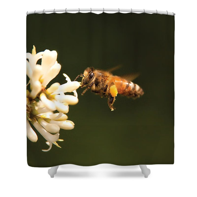 Savad Shower Curtain featuring the photograph Insect - Bee - Honey I'm Home by Mike Savad