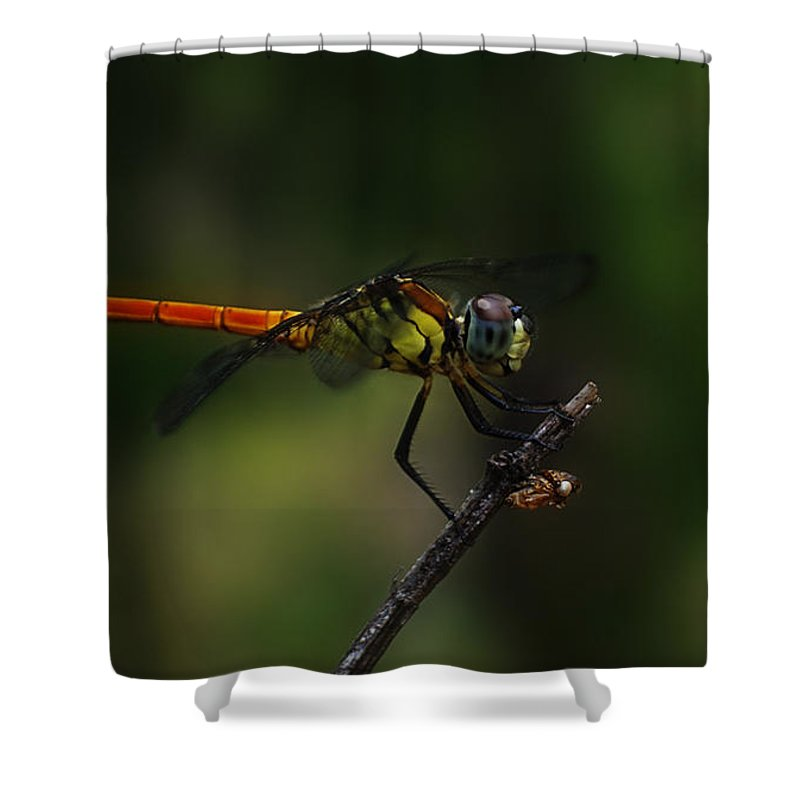 Insect Shower Curtain featuring the photograph Insect 1 by Ben Yassa