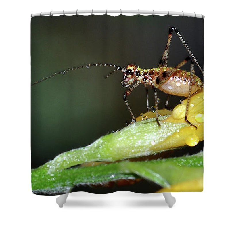Insect Shower Curtain featuring the photograph Insect And Morning Dew by Surjanto Suradji
