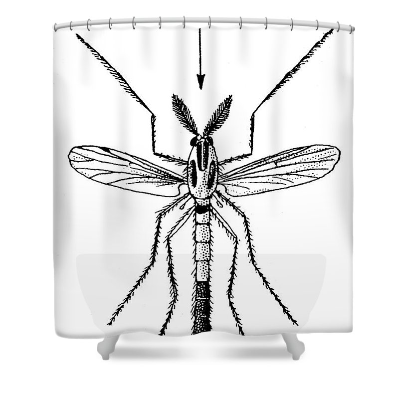 Animal Shower Curtain featuring the photograph Insect: Midge by Granger