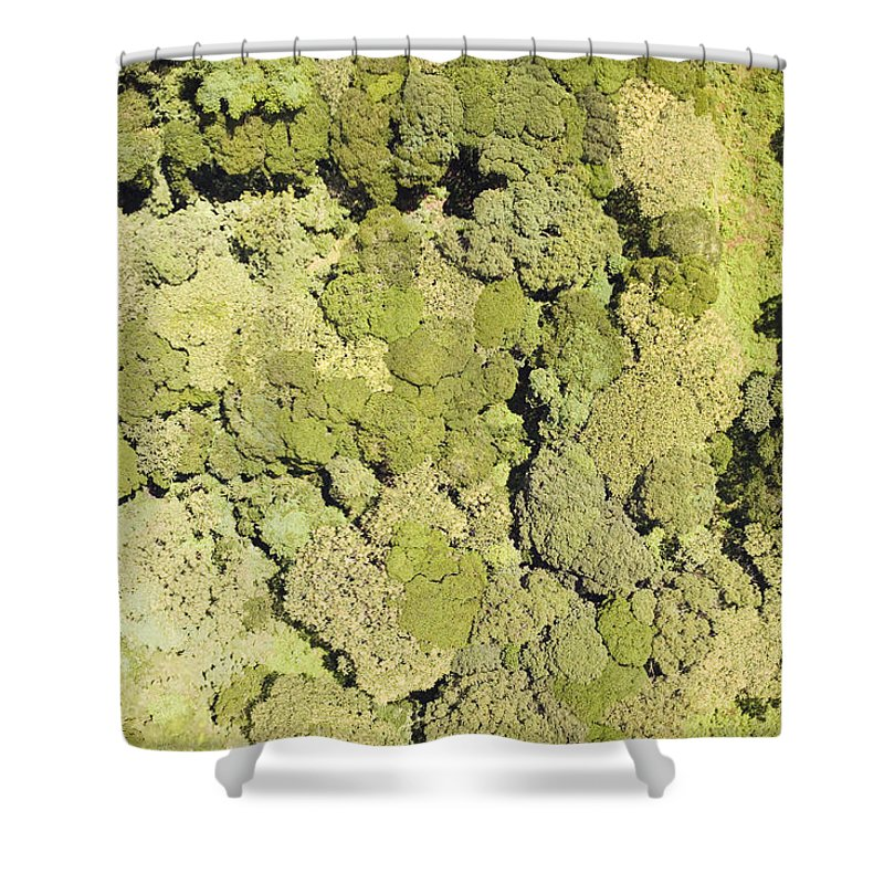 Landscape Shower Curtain featuring the photograph Inside Mount Kilimanjaro National Park by Michael Fay