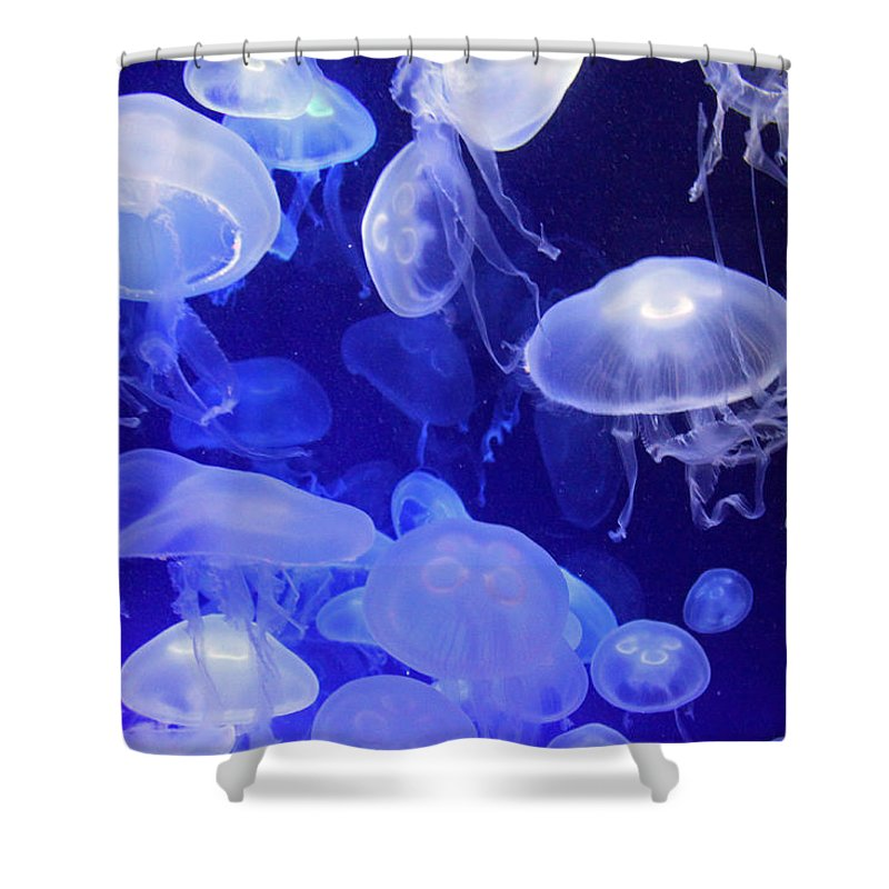 Jellyfish Shower Curtain featuring the photograph Intangible Realities by Mitch Cat