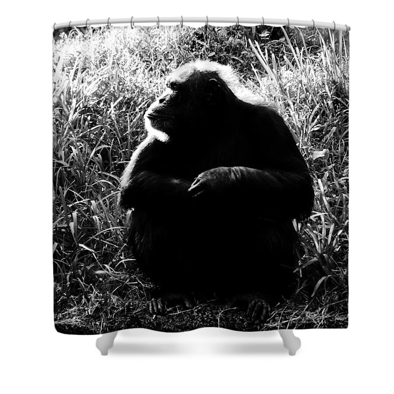Smart Shower Curtain featuring the photograph Intelligence by David Lee Thompson
