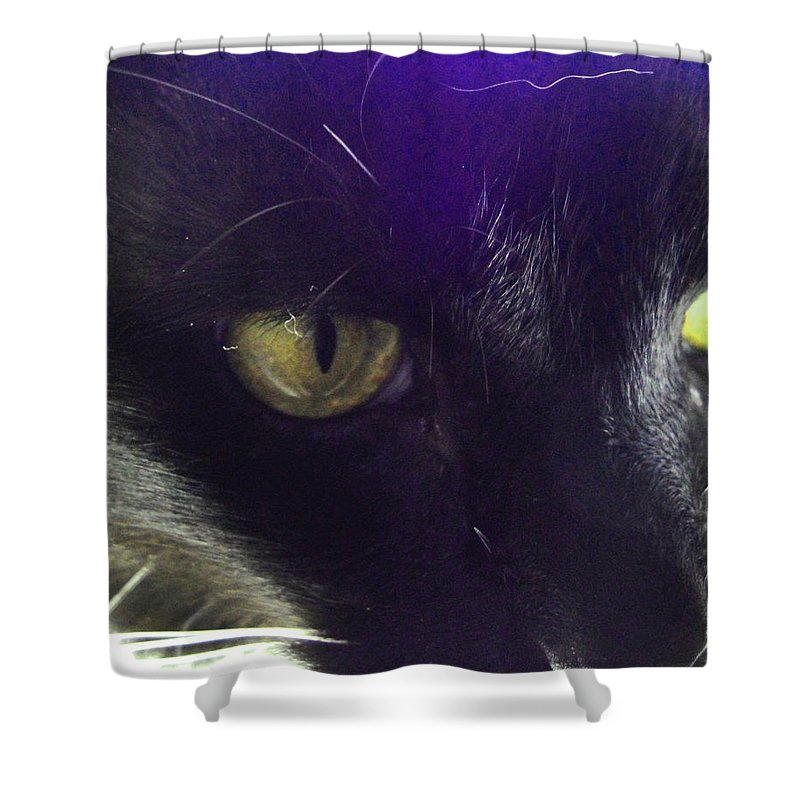 Cat Shower Curtain featuring the photograph Intense by Susan Baker