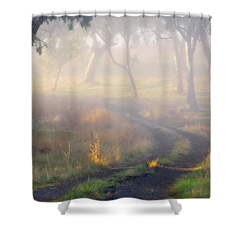 Mist Shower Curtain featuring the photograph Into The Mist by Mike Dawson